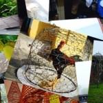 Fotos bei Snapfish einfach und schnell entwickeln – Meine Erfahrung