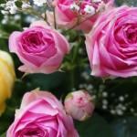 Shopvorstellung: Blumen online bestellen bei iFlowerGift