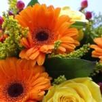 Blumen online bestellen bei BlumeIdeal – Der große Blumen-Test online